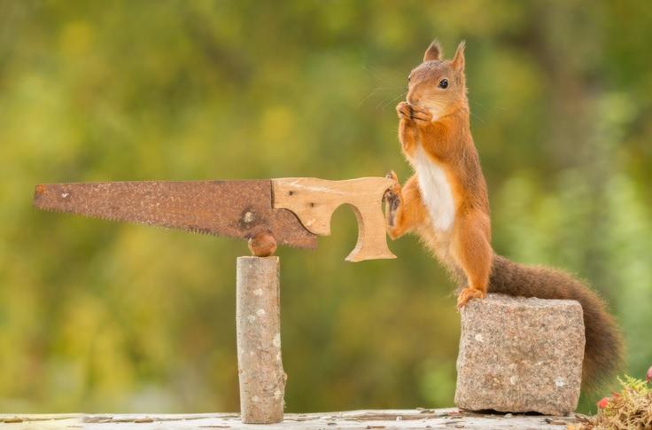 Stress? – Dann helfen clevere Snacks und der Fuchshörnchen-Frust-weg-Effekt