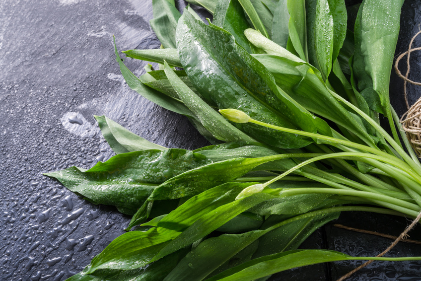 Frühjahrsmüde? –  Warum Sie jetzt unbedingt zu Bärlauch-Pesto greifen sollten